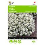 Alyssum Snowcloth flower seeds