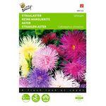 Aster Unicum Seeds
