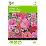 Red and Rose Flower Seeds mix