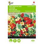 Nasturtium flower seeds mini