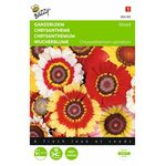 Chrysanthemum Flowerseeds
