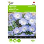 baby blue eyes flower seeds