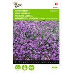 Trailing Lobelia flower seeds
