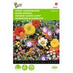 Japanese Flowercarpet seeds