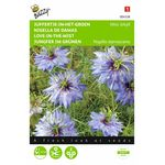Love-in-a-Mist flower seeds