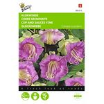 Cup and Sauces Vine flower seeds