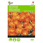 french marigold flower seeds Carmen