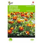 French marigold seeds Petite
