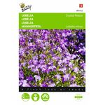 Lobelia flower seeds