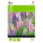 Lupin flower seeds