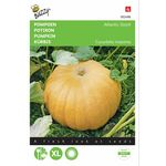 Pumpkin Seeds atlantic Giant