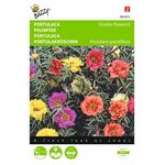 portulaca flower seeds