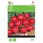 Radish seeds Cherry Belle