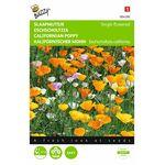 Californian Poppy Flower seeds