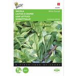 Leaf Lettuce Seeds