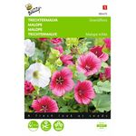 malope flower seeds