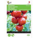 Vine Tomato seeds F1 hybrid
