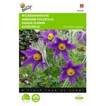 Pasque Flower seeds