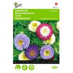 aster flower seed mixture