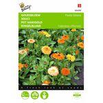 marigold flower Fiësta Guiana flower seeds