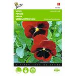 Pansy Alpenglow flower seeds