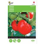 Tomato seeds Pyros F1 hybrid
