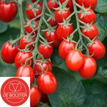 Organic Cherry Tomatoes Seeds 'Bolstar Baloe F1'