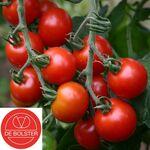Organic Cherry tomatoes seeds 'Zuckertraube'