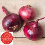 Organic Onion Seeds Red Baron