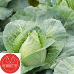 Organic Seeds Pointed Cabbage Caraflex F1
