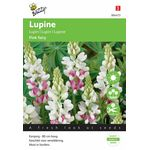 Lupin flower seeds pink fairy