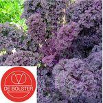 BIO / Organic Curly Kale Westlandse [CLONE] [CLONE]