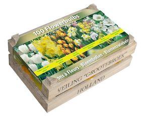Flowerbulbs 100pieces. Yellow / Orange / White  incl. Wooden Box