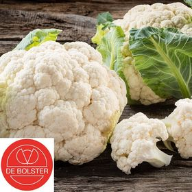 Organic Cauliflower seeds Alpha 7