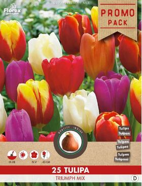 Tulpen bloembollen Triuph Mix