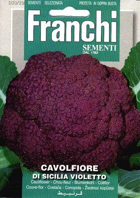 Cauliflower Violet