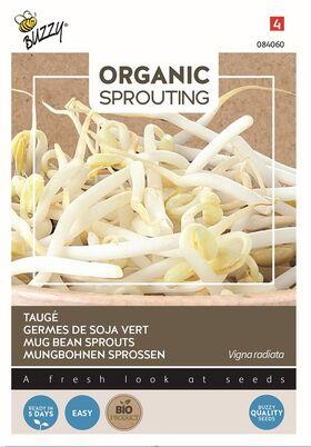 Organic Mung Beans sprouting