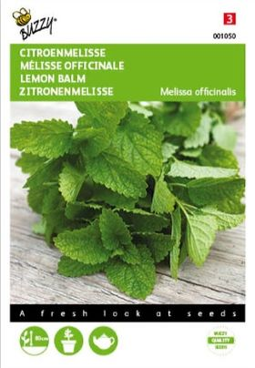 Mélisse Officinale Lemon Balm