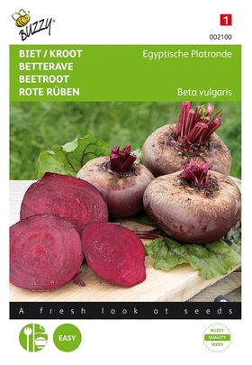 Beetroot Egyptian Turnip Rooted