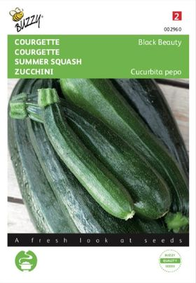Summer Squash Black Beauty
