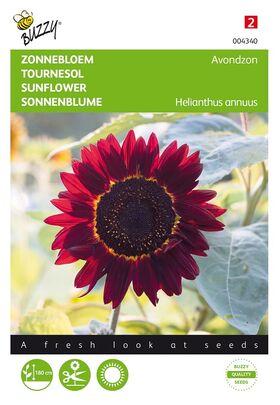 Sunflower,Eveningsun