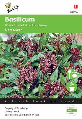 Sweet Basil Siam Queen seeds
