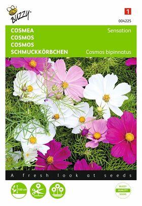 Cosmos seeds Sensation
