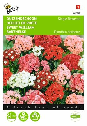 Sweet William flower seeds