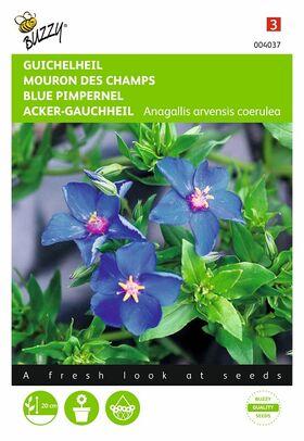 Blue pimpernel flower seeds