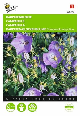 Campanula Carpatica flower seeds