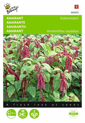 Love-Lies-Bleeding flower seeds