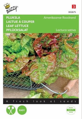 Lettuce Seeds American Red Edge