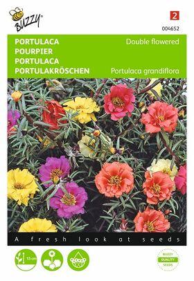 portulaca flower seeds