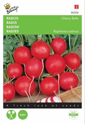 Radish seeds Cherry Belle